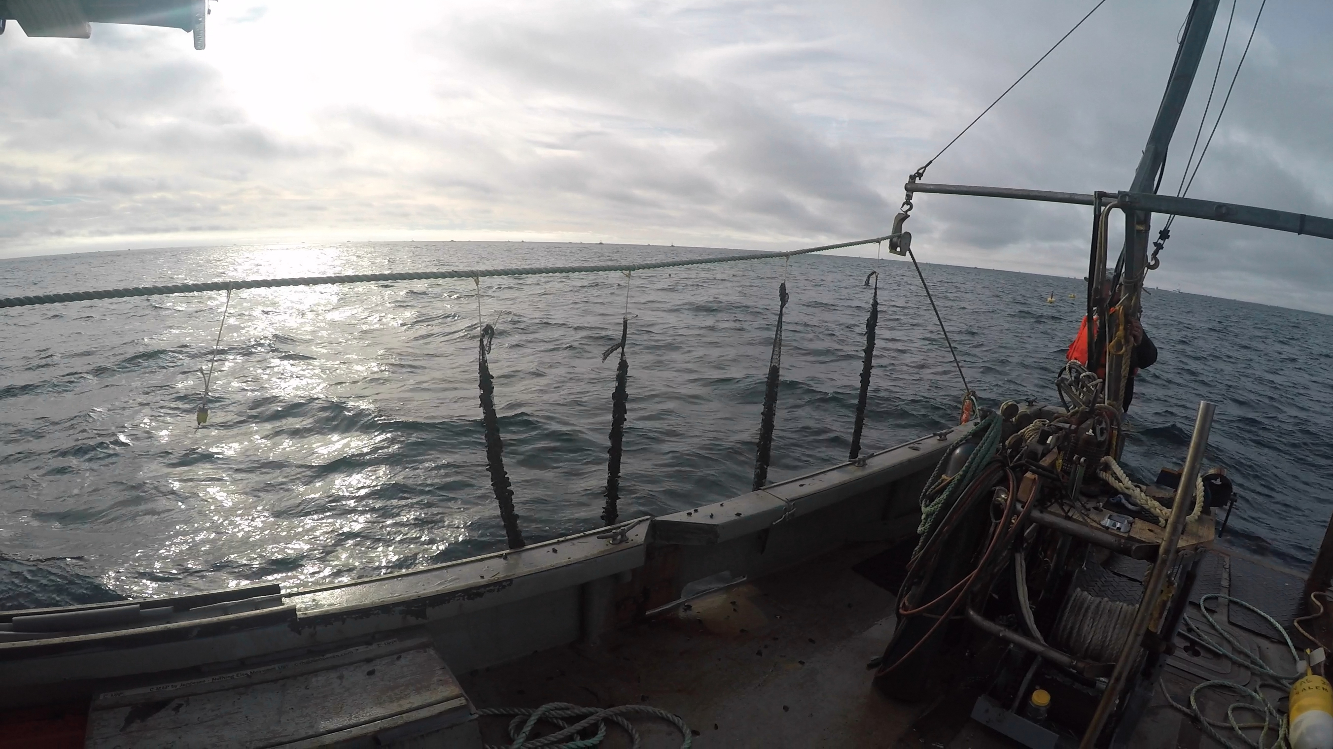 Mussel grow lines being deployed at offshore mussel farm site